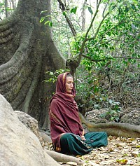 Wu Xing, cultivating the mind, meditation with the nature elements, at the root of a big tree.